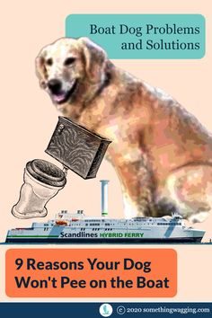 If you want to sail far from shore, you'll need your live aboard dog to pee on the boat. Here's what could be going wrong. And how to fix it? #boatdog #cruisingdog #liveaboarddog Crate Training, Dog Training Tips, Dogs On Boats, Sailboat Living, Dog Pee, Kinds Of Dogs, Pet Travel, Large Dogs, Sailing