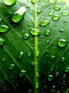 this is green to me; clean, crisp, cool, wet; i can completely feel the texture just by looking at the photo; love it  #lifeinstyle #greenwithenvy