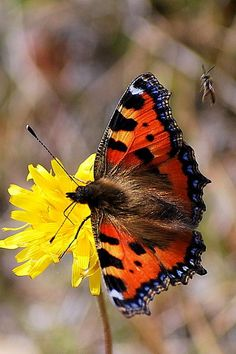 Butterfly and someone else