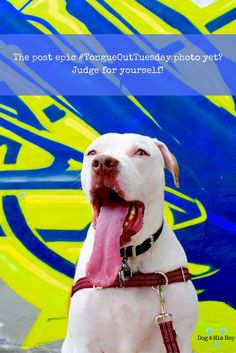 Could this be the most epic #TOT photo of deaf dogs yet? Check out these other photos and judge for yourself!