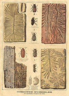 insects || le petit journal 25 avril 1897