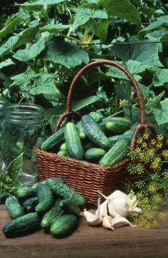 If you like pickles, make sure to plant dill with your cucumbers.