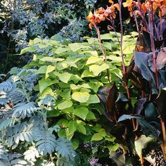 Garden Shrubs – Gardeners Advice Great Plants for Pacific Northwest Landscapes Green Landscape, Landscape Design, Garden Design, Landscape Art, Driveway Landscaping, Landscaping Plants, Landscaping Ideas, Backyard Ideas, Inexpensive Landscaping
