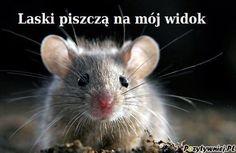 śmieszne obrazki na fb - Szukaj w Google Funny Mouse, House Mouse, Animal 2, Good Mood, Funny Animals, Humor, Pictures, Small Animals, Facebook