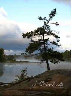 J. Schwindt Photography - Georgian Bay Pine, Nature Photography