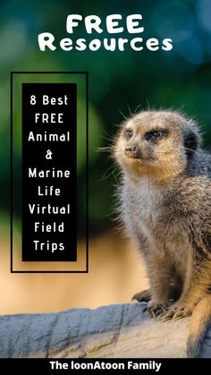8 Best Free Animal and Marine Life Virtual Field Trips - The loonAtoon Family