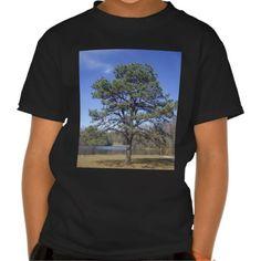 Park Pine Tees!  #Appalachia #photography #gift #zazzle #store #present #Christmas #birthday #hillbilly http://www.zazzle.com/dww25921*