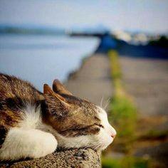 Just catching a little nap in the sun http://ift.tt/2idQjhH