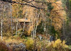 Autumn time... Taivalköngäs Kuusamo Finland  Kuva Aili Alaiso Finland