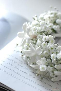 Baby's breath and stephanotis