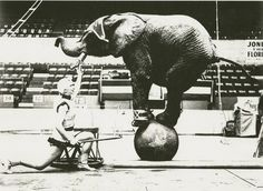 Eloise and her African elephant Koa appearing with Harold Bros. Circus at the International Amphitheatre 1959.