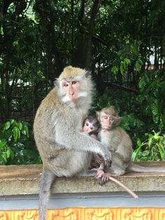 Bu aileyi çok sevdim🤗Bali, Monkey Forest ...