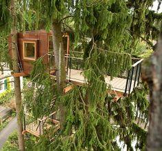 Baumraum   Buschhaus München   Shelter   Pinterest   Bäume, Haus ... Das Magische Baumhaus Von Baumraum