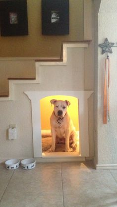 Dog bed under stairs in the breakfast/kitchen area Pet Beds, Dog Bed, Dog Spaces, Small Spaces, Dog Rooms, Under Stairs, Home And Deco, Dog Houses, Dog Life