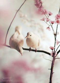 be my  loving dove...soulmate