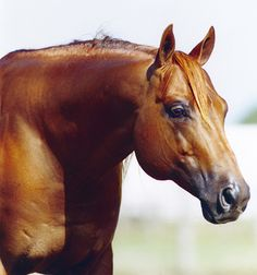 Topsail Whiz Becomes NRHA's First Eight Million Dollar Sire