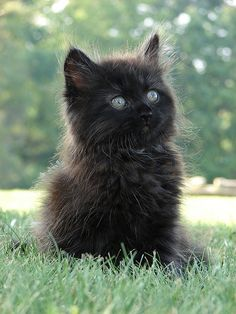 Black kitten what a cutie pie - I HOPE WE HAVE MORE WITH FLUFFY COATS - SOOOO CUTE !! XX
