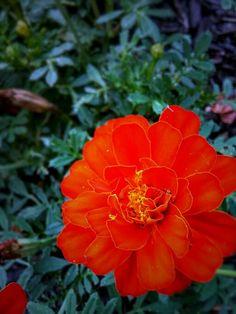 Flower as seen through my smart phone. Gotta love color