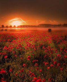 warm mist by Patrick Strik, via 500px