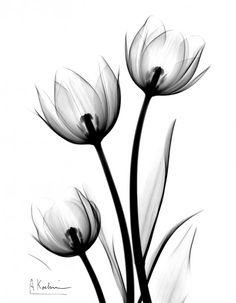 Parrot Tulips - Stunning x-ray photography by Albert Koetsier.