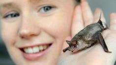 Tiny bats put the bite on mozzies - Bat Ecologist Micaela Jemison with George, the Southern Freetail bat