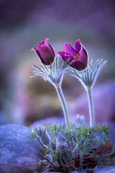 Март – дух весны, сама идея пробуждения природы, торжество света, дающего жизнь, это начало оживления. Апрель – душа весны. Это весна, набравшая силы ... - Inna Sh - Google+