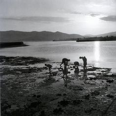 Μάζεμα καβουριών, Κάρυστος, 1950-55 Φωτογραφία: Βούλα Παπαϊωάννου