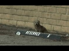 Hendrix: homeless dog in an industrial area - too scared to let rescuers...