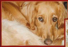 Stella, golden retriever