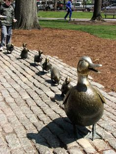 These ducklings waddle through Boston Common to commemorate Robert McCloskey's children's book Make Way for Ducklings, which is set there.
