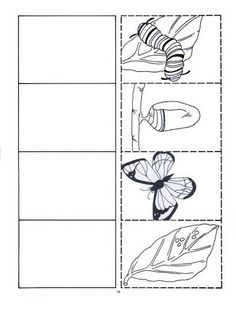 Science Worksheets Kindergarten Life Cycles 29 New Ideas Science Worksheets, Worksheets For Kids, Kindergarten Science, Kindergarten Worksheets, Chenille Affamée, Butterfly Metamorphosis, Butterfly Life Cycle, Butterfly Art, Butterflies