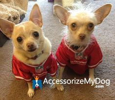 NFL 49ers Jersey's From AccessorizeMyDog.com . . . really cute models!