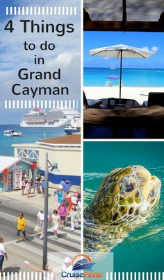 Grand Cayman is one of our favorite ports of call in the Caribbean, and there is plenty to do there. Here are just 4 things to do while on a cruise or visit to the island. Let us know what you like to do on Grand Cayman as well and we might add it to the Best Cruise, Cruise Port, Cruise Travel, Cruise Vacation, Cruise Tips, Disney Cruise, Family Cruise, Beach Vacations, Italy Vacation