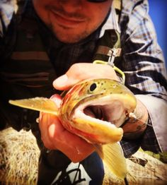 @ontarioflyco #pheasanttailnymph catching me a gorgeous #yellowstonecuthroat #iflyfishmontana #photgrapher #ifish #instyle #montana #montanaflyfishing #montanagram #montanamoment #montanalife #fishing #flyfishing #flyfishingjunkie #flyfishingaddict #flyfishinglife #flyfishingnation #onthefly #trout #catchandrelease #repyourwater #troutbum #instagood #ilovefishing #iphone6s #iphone6sphotography #flyfishingphotography keep an eye out for my review and get a promo code for Ontario Fly Co. by iflyfishmontana Follow \