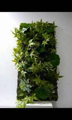 7 Meilleures Images Du Tableau Cadre Vegetal Gardening Gardens Et