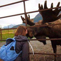 Smooooooooooch Moose