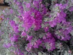 Canteiro de flores, Praça da saudade.