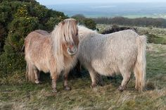 SPRING IS IN THE AIR | www.frontiergap.com | #baby #animals #Shetland #ponies