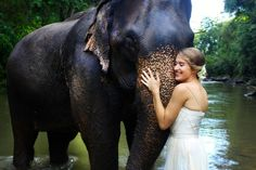 Thailand Elephant Wedding — The Chai Lai Orchid Stuff To Do, Things To Do, Thai Elephant, Thailand Elephants, Elephant Wedding, Chiang Mai, Chai, Bangkok, Orchids