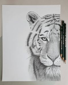 Pencil drawing tiger The post Рисунок тигра карандашами. Pencil drawing tiger appeared first on Animal Bigram Ideen. Pencil Drawings Of Animals, Animal Sketches, Art Drawings Sketches, Easy Drawings, Drawings Of Tigers, Realistic Drawings Of Animals, Cool Pencil Drawings, Drawing Animals, Drawings Of Birds