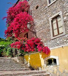 Bougainvillea  Sicily, Taormina