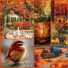 Autumn mood board displays a New England Autumn.