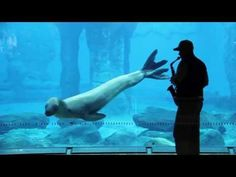 Seal serenaded with music by zookeeper.
