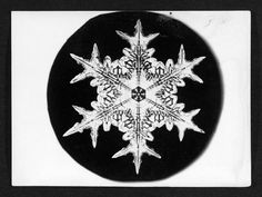 The first photographs of snowflakes revealed unique, 'tiny miracles of beauty' Wilson Bentley proved that no two are alike Tiny Miracles, First Photograph, Mother Nature, Snowflakes, My Arts, Crystals, Unique, Artwork, Xmas Ideas