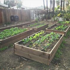 Kales in raised beds garden... Thanks Dan. This a a great inspiration! #urbangarden #gardening #UGRgarden Credit (IG) @gardengraffiti