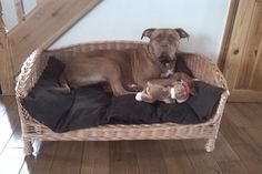Introducing the styish,Luxury Handmade Wicker Dog Bed Settee, with a removable,washable cushion. XL SIZE shown