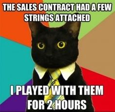 Business cat is back? Fuck yeah - Imgur