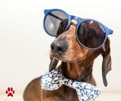 ¿Tu mascota es la más graciosa del universo?   ¡Este es su concurso! #mascotaIberia