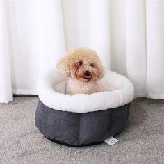 New cheap pet gift uploaded at SketchGrowl: Chenille 2 Dog Bed Cheap Dog Beds, Cheap Pets, O Design, Gifts For Pet Lovers, Pet Gifts, Dog Lovers, Pet Kennels, Pet Bag, Pet Feeder