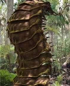 Arthropleura - A giant centipede like arthropod that lived during the Carbonifer. Arthropleura - A giant centipede like arthropod that lived during the Carbonifer. Arthropleura - A giant centipede like arthropod that lived during the Carbonifer. Prehistoric Insects, Prehistoric World, Prehistoric Creatures, Walking With Dinosaurs, Dinosaur Pictures, The Lost World, Animal Species, Vertebrates, Car Drawings